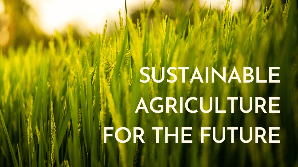 [Événement] Webinaire : TRANSITION TOWARDS SUSTAINABLE AGRICULTURE IN EUROPE : THE AGROECOLOGY
